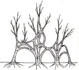 triptyque arbres 00 copie